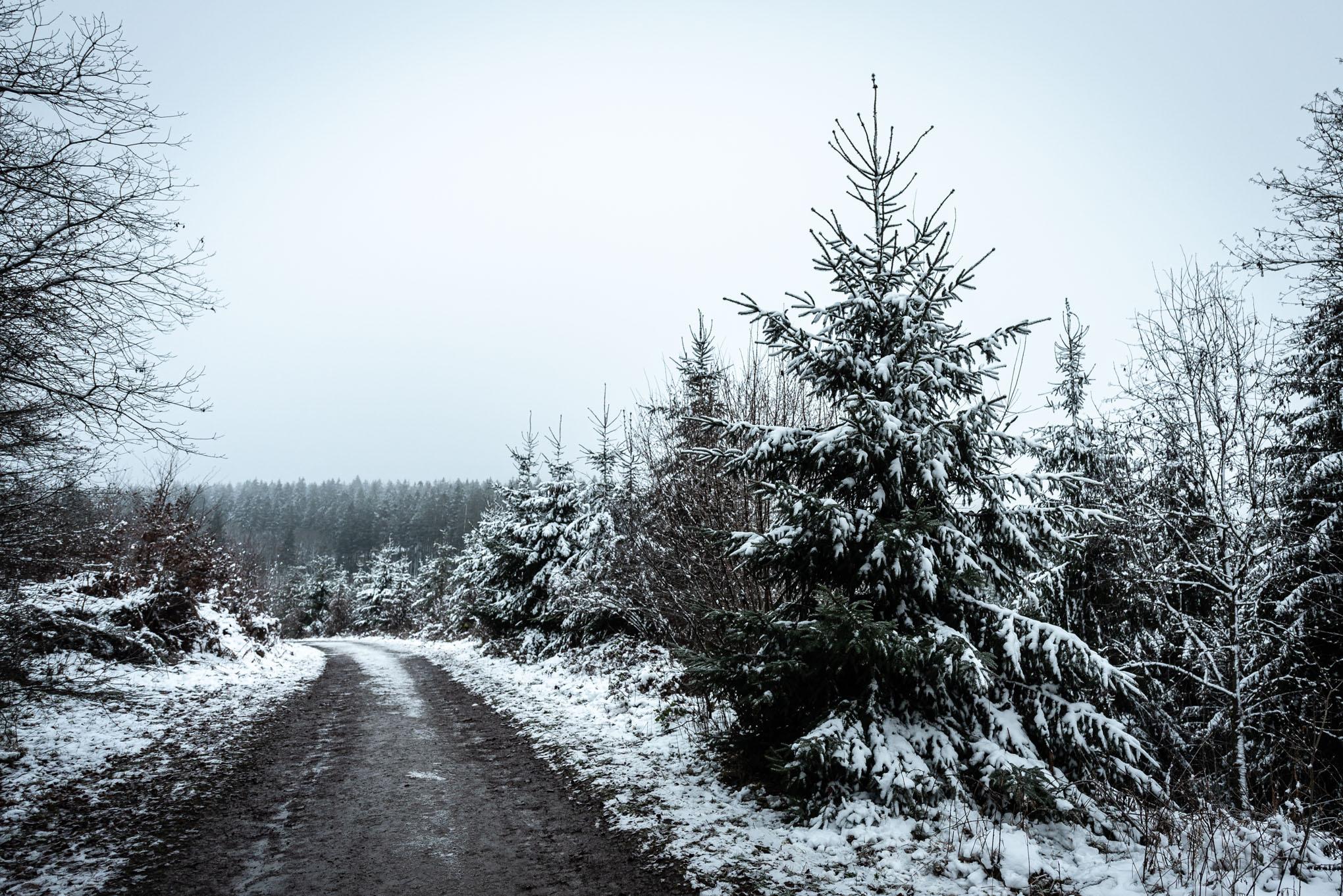 Chemin enneigé dans les Hautes Fagnes