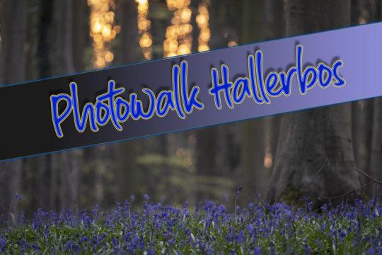 Photowalk Hallerbos